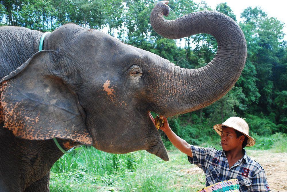 chiang-mai-excursiones-elefantes