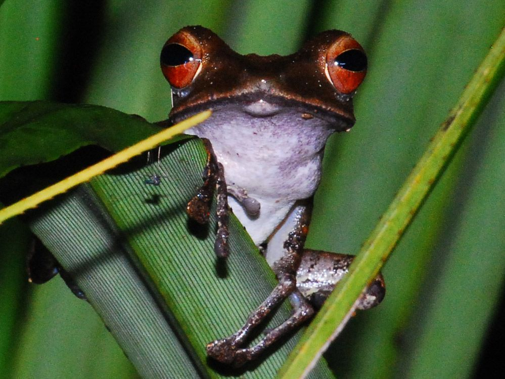 Borneo-Indonesia-fauna