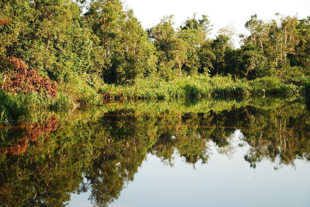selvas-de-Borneo