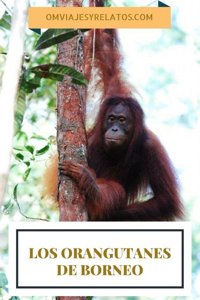 Borneo-Indonesia
