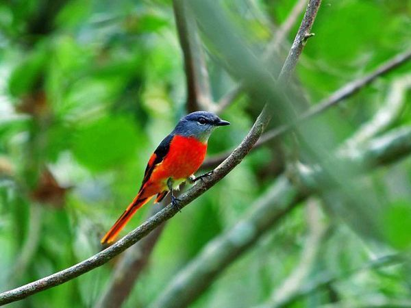 aves-Doi-Inthanon-naturaleza-Norte-de-Tailandia