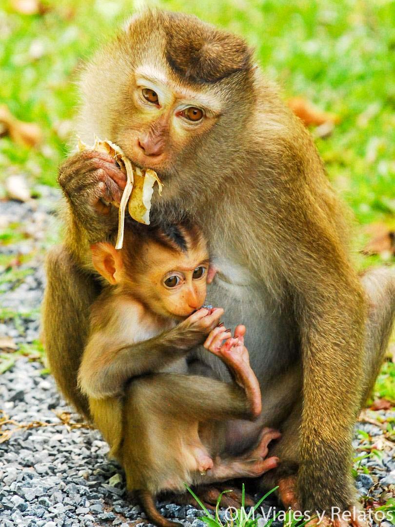 que-ver-en-Tailandia-naturaleza