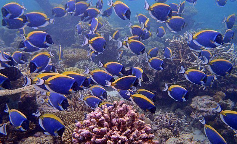 snorkel-Maldivas