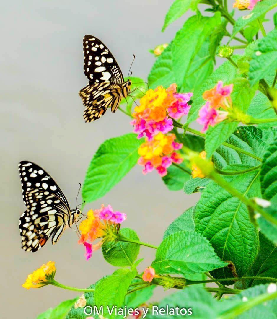 paisajes-India
