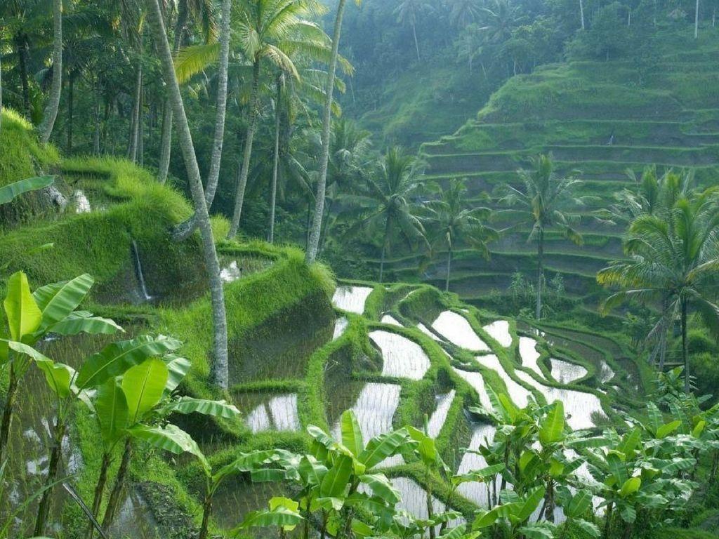 razones-para-un-viaje-a-Indonesia-Bali