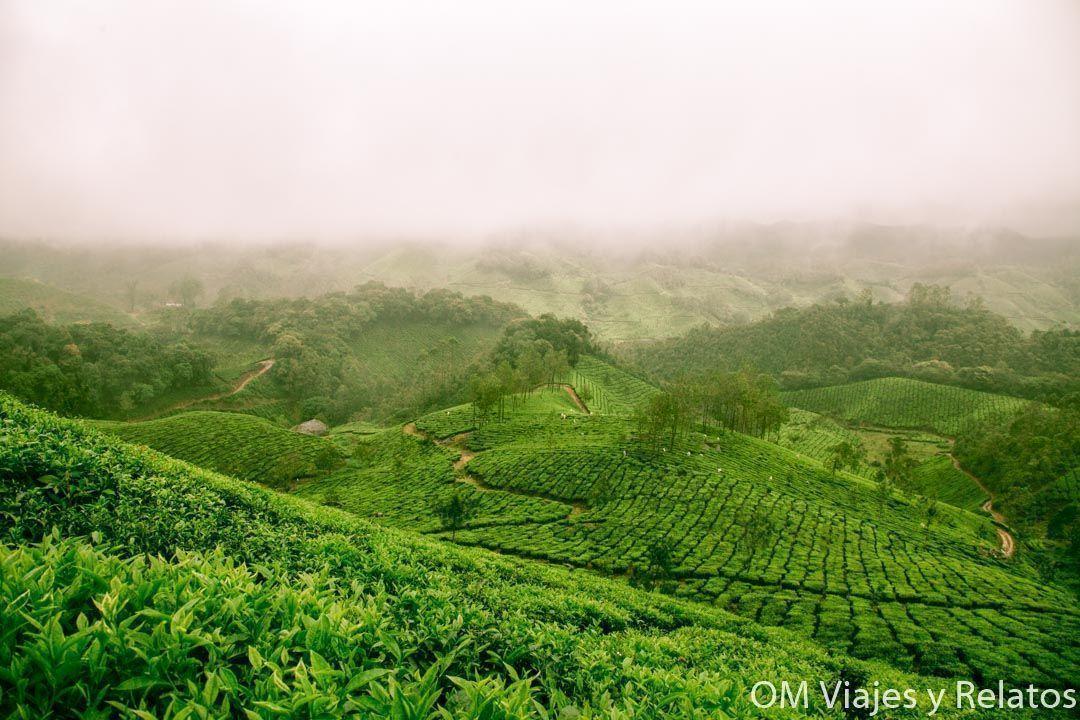 viaje-a-Kerala-campos-de-té-Munnar