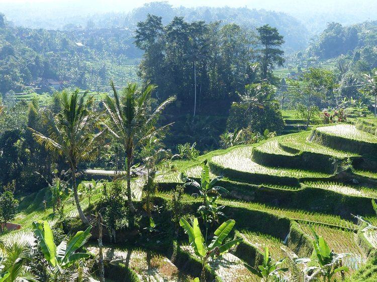 arrozales-de-Bali-UNESCO