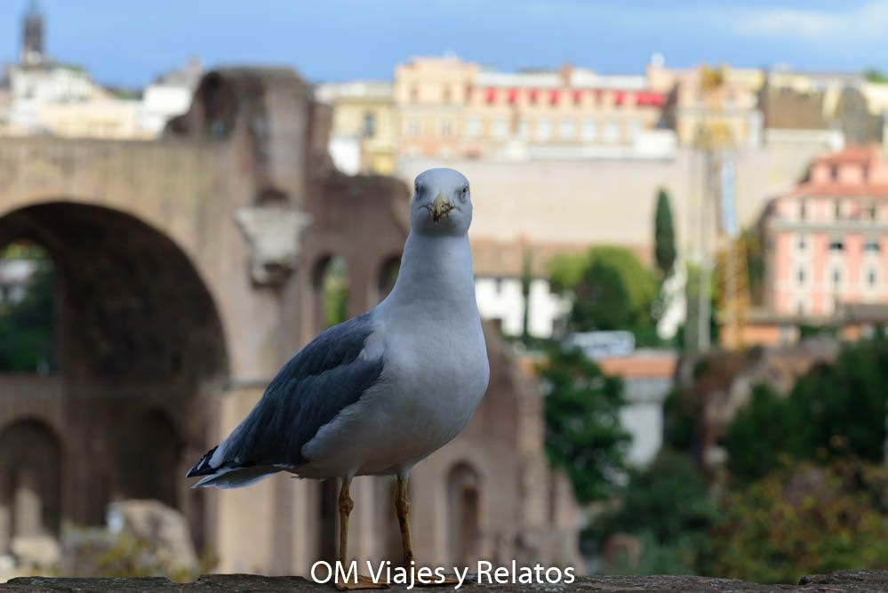 Ruta por Roma