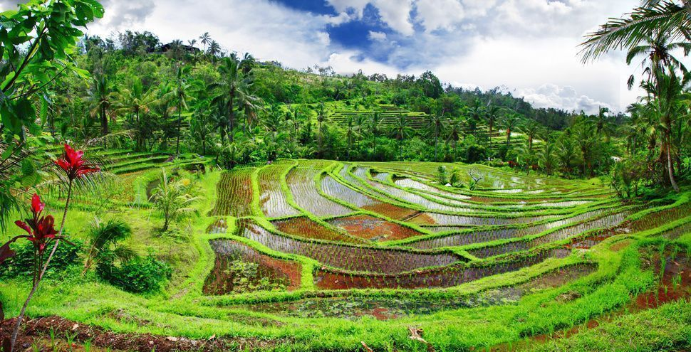 arrozales-bali-PAISAJES-EXCURSIONES