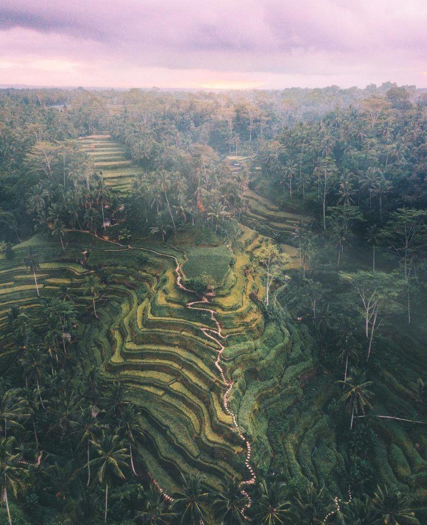 arrozales-Isla-de-Bali