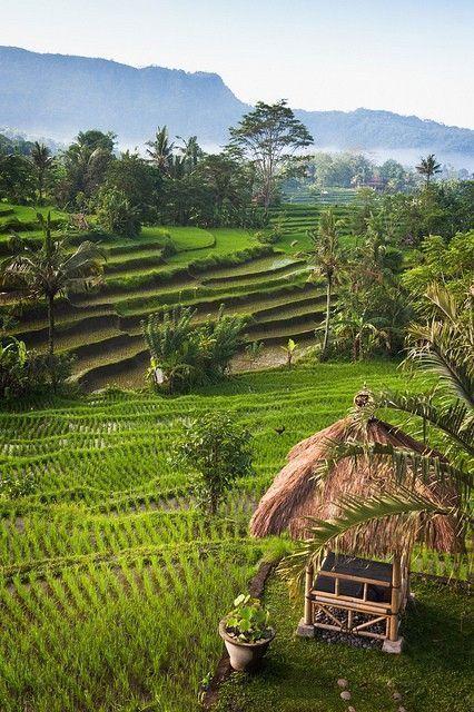 isla-de-Bali-arrozales