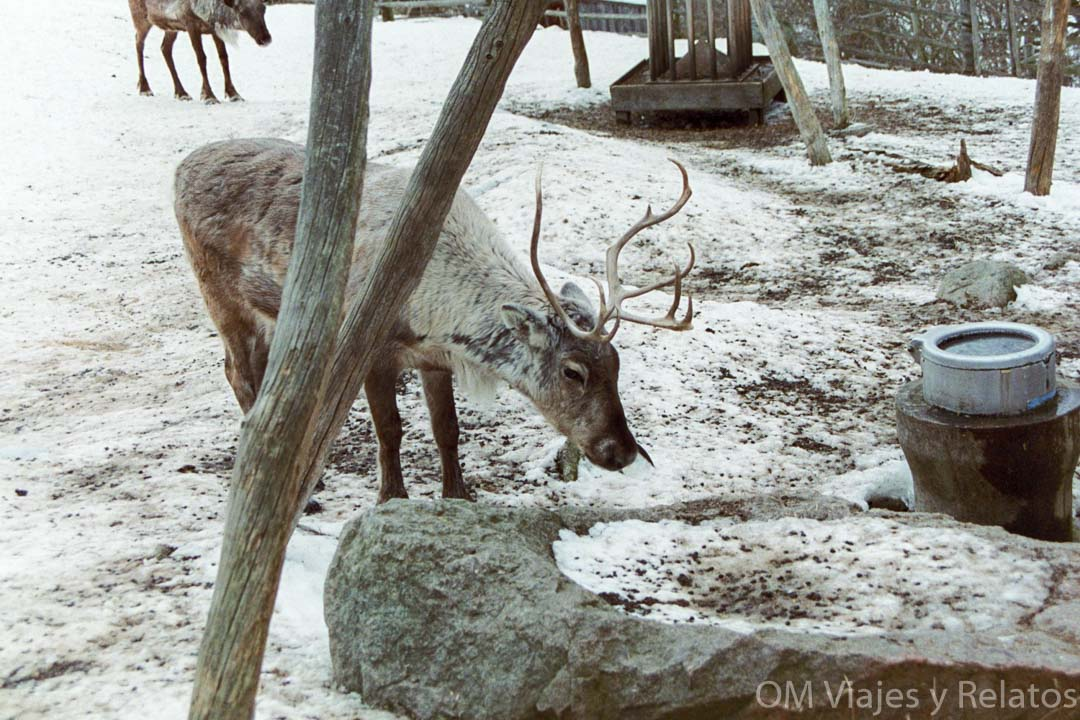zoo-animales-Skansen-Estocolmo