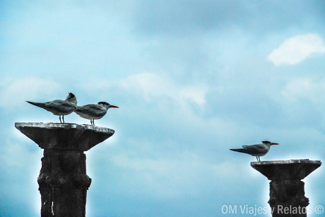 aves-los-haitises