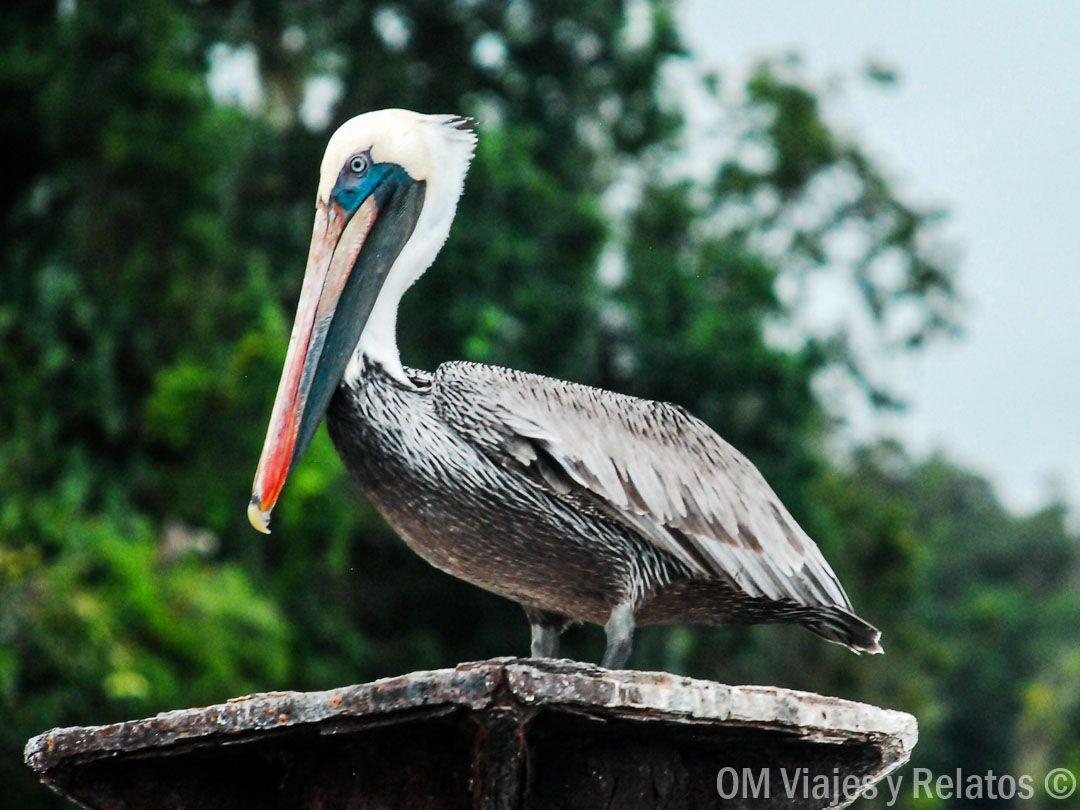 fauna-los-Haitises