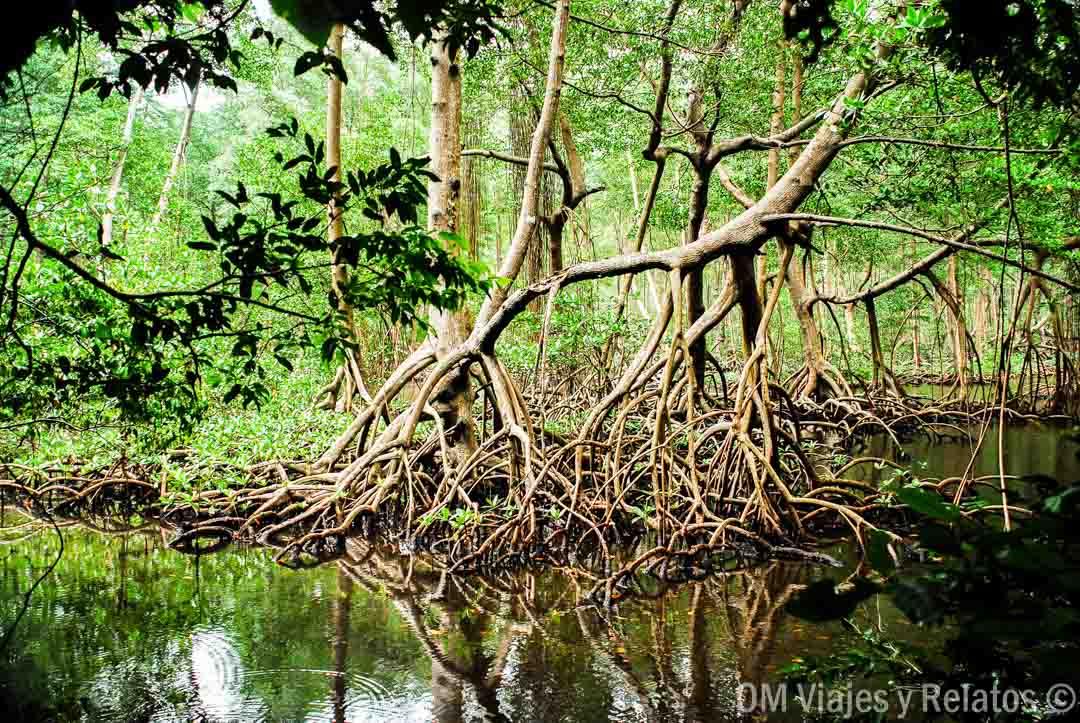 haitises-manglares-viaje-República-Dominicana