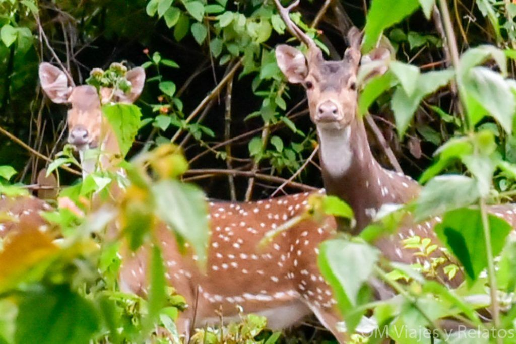 Fauna-India-parques-naturales-naturaleza