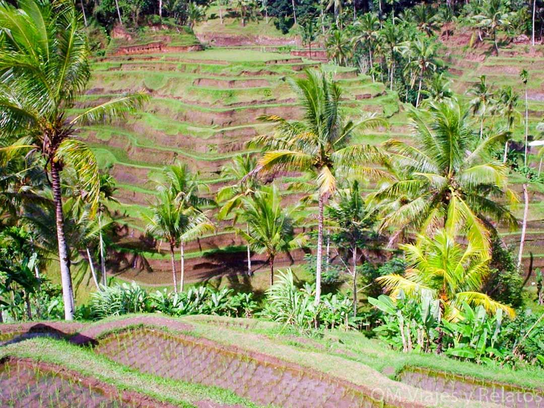 excursiones-campos-de-arroz-Bali
