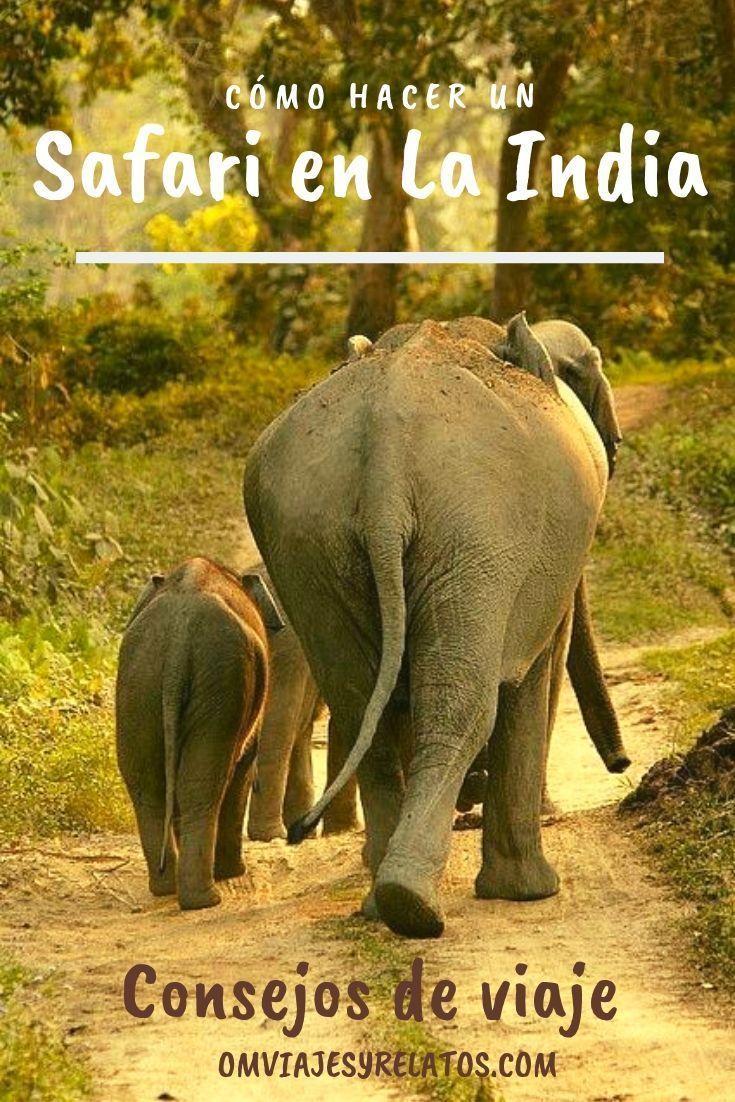 safari-en-la-India