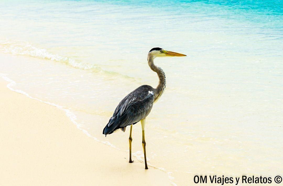 viajar-a-Maldivas-consejos-curiosidades