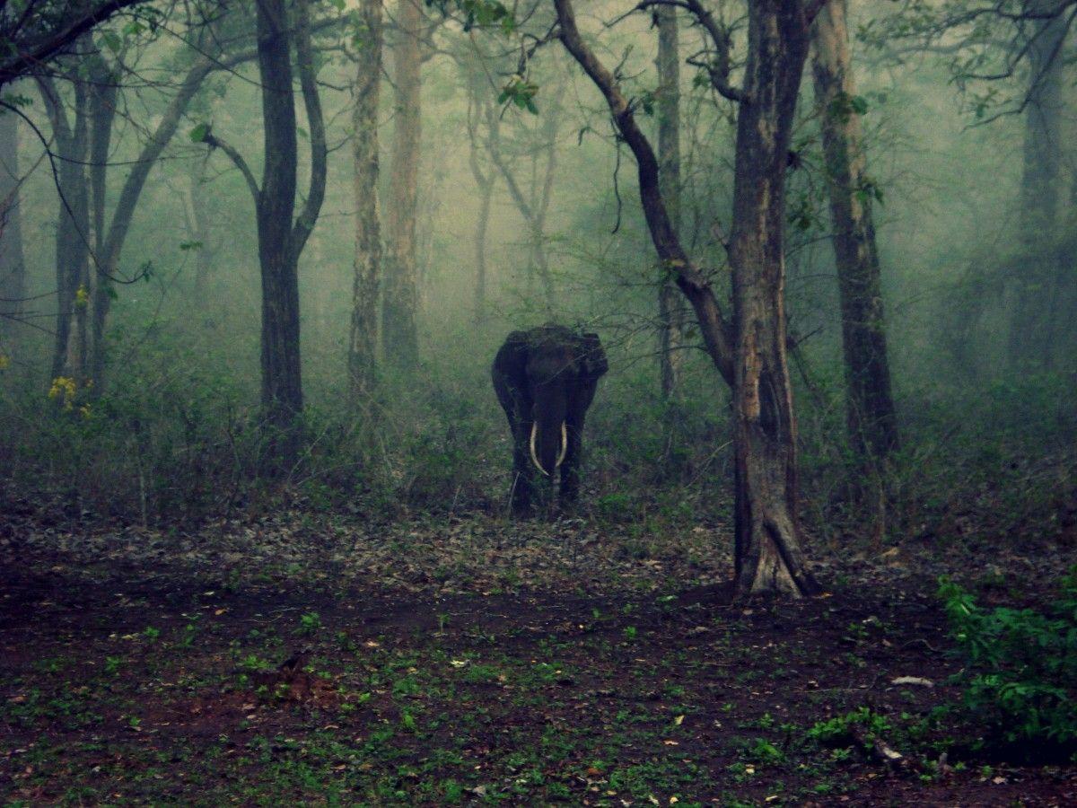 safari-jungle-India
