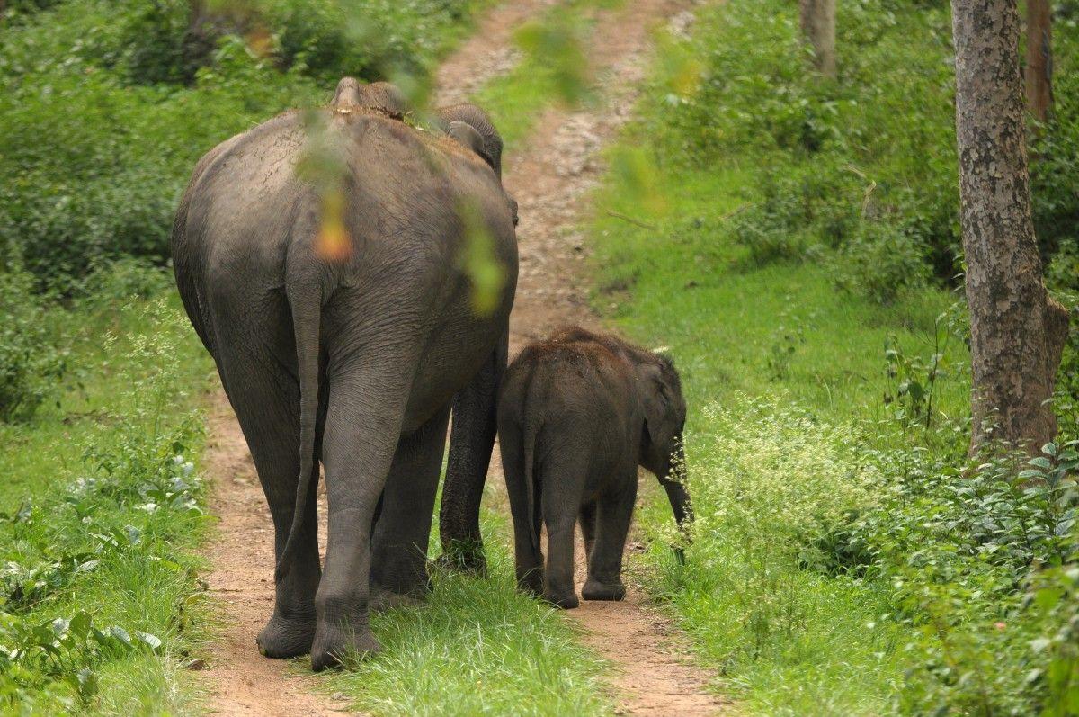 safari-India
