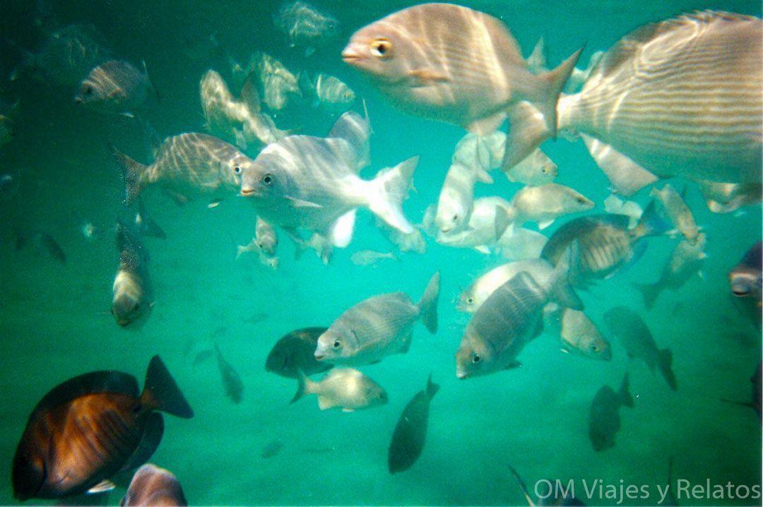 buceo-y-snorkel-en-la-Riviera-Maya