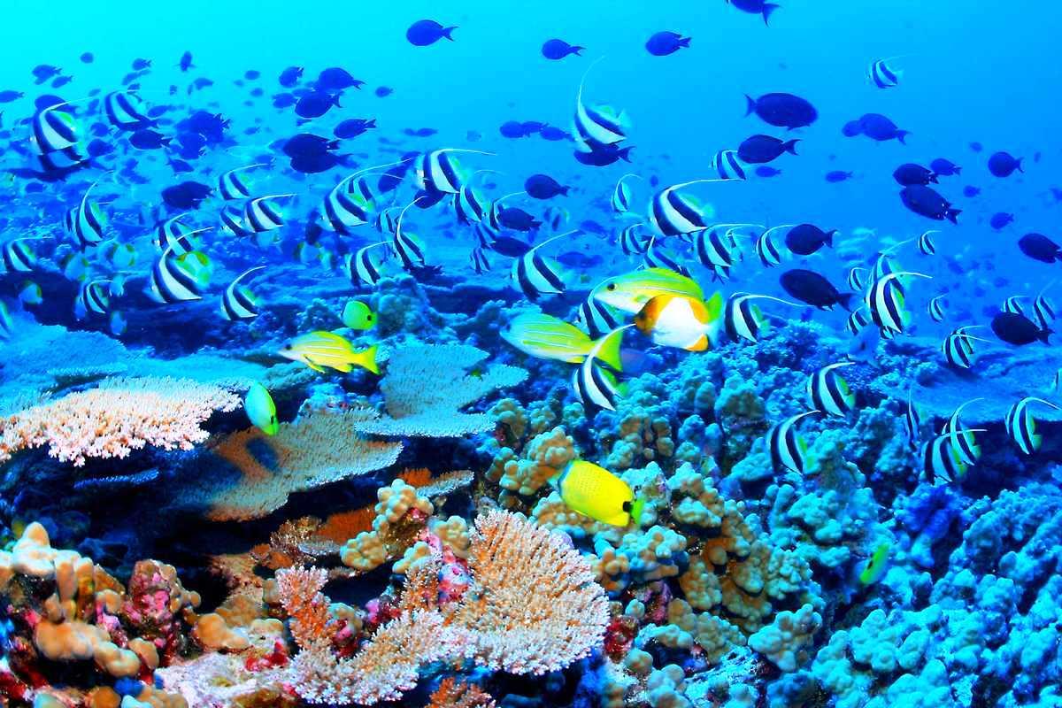 excursiones-en-la-riviera-maya-buceo-snorkel