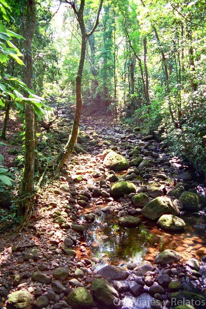 Naturaleza-de-Costa-Rica-Tortuguero-por-libre