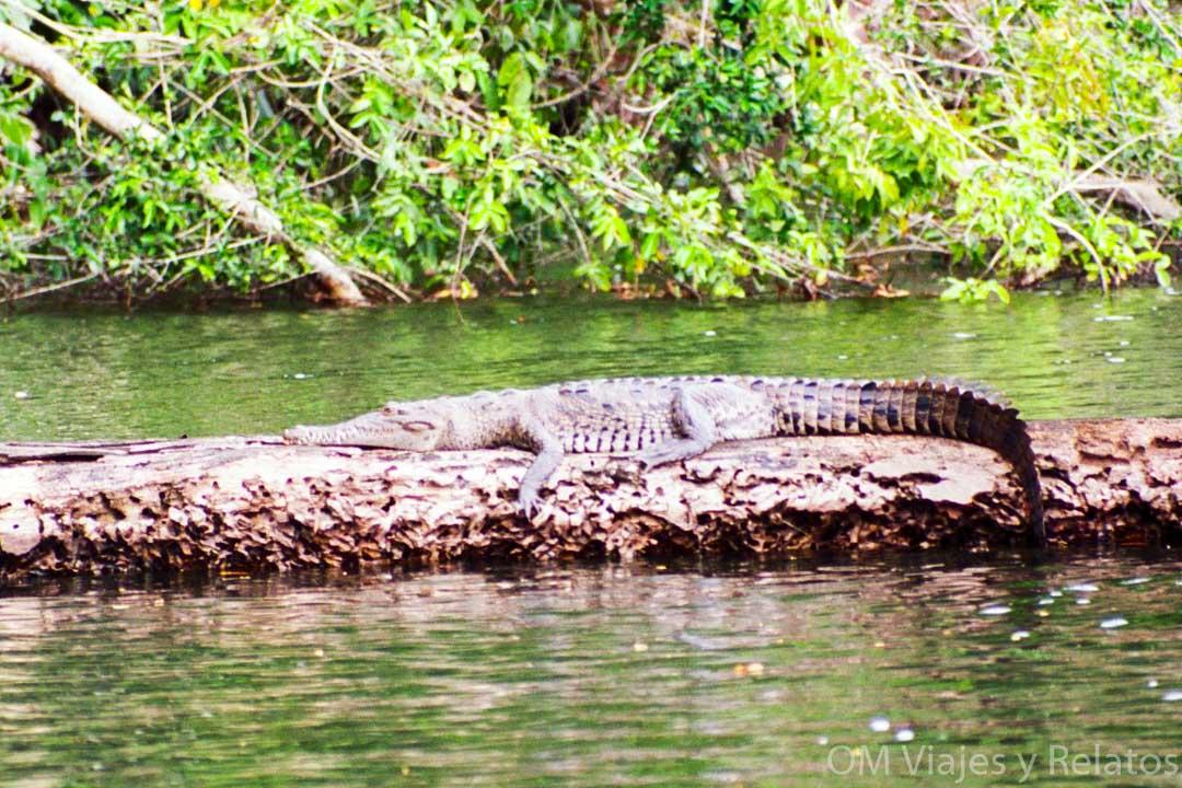 Fauna-y-flora-excursión-Tortuguero-Costa-Rica-por-tu-cuenta