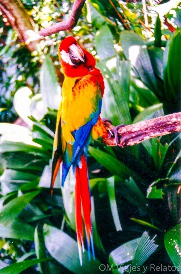 El-balneario-de-Tabacón-viaje-a-Costa-Rica