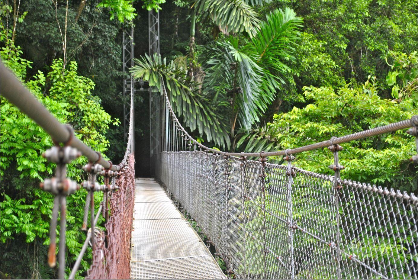 puentes-colgantes-parque-nacional-volcán-Arenal