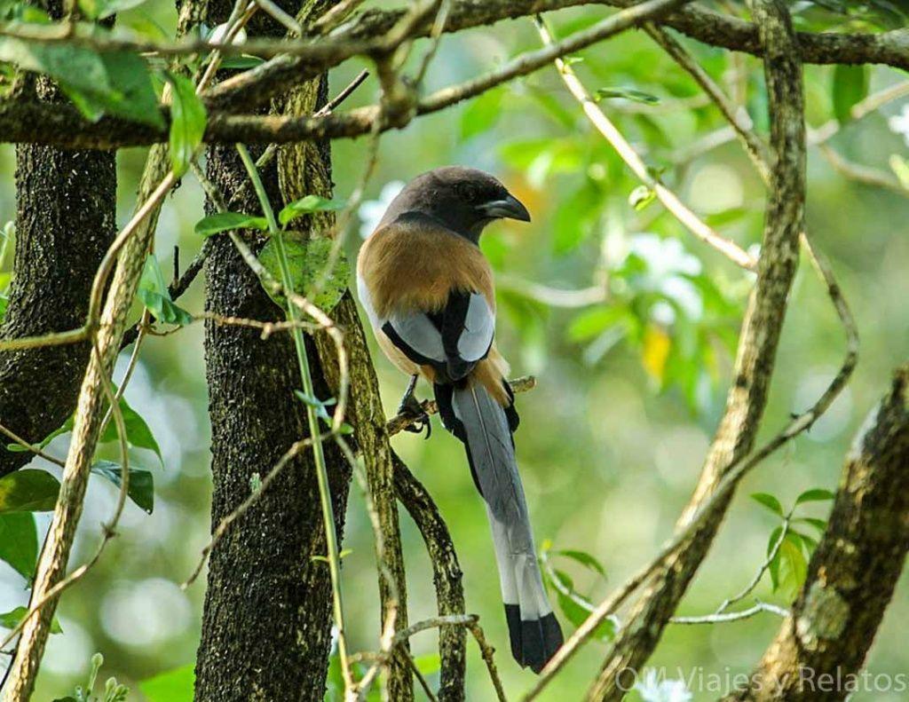Reserva-de-Aves-Kerala