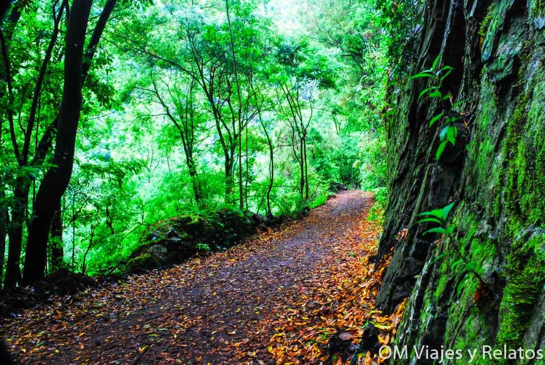 bosques-Laurisilva-Isla-Bonita