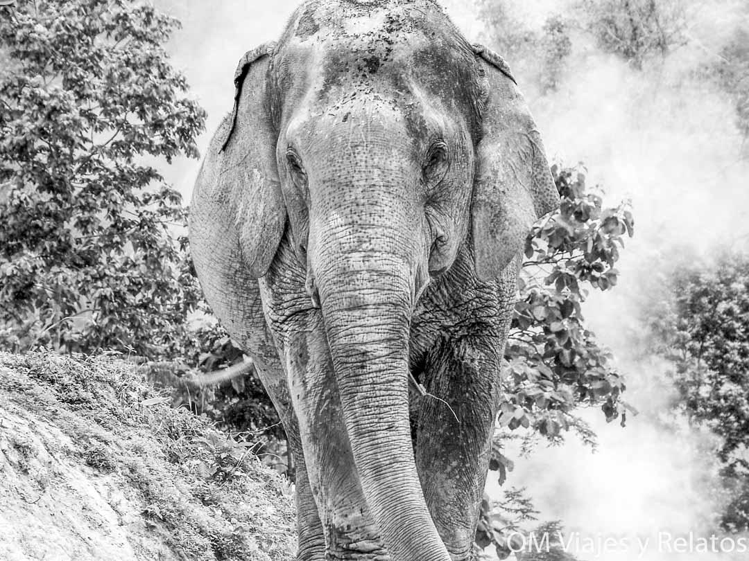 excursión-de-elefantes-en-Chiang-Mai