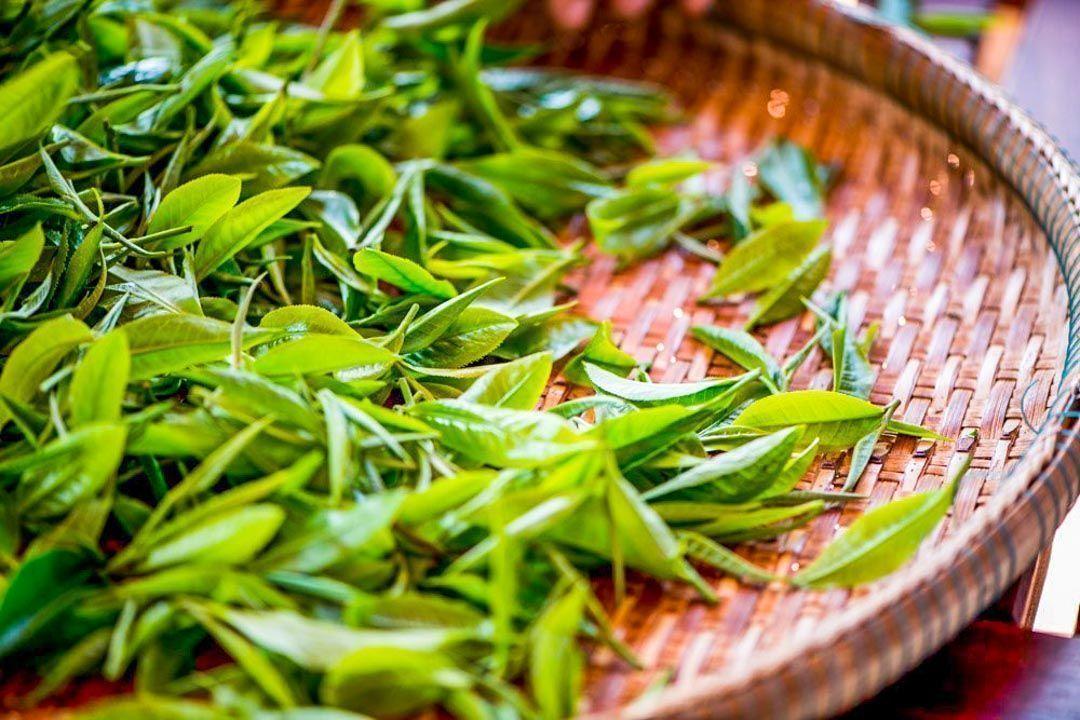 actividades-en-Chiang-Mai