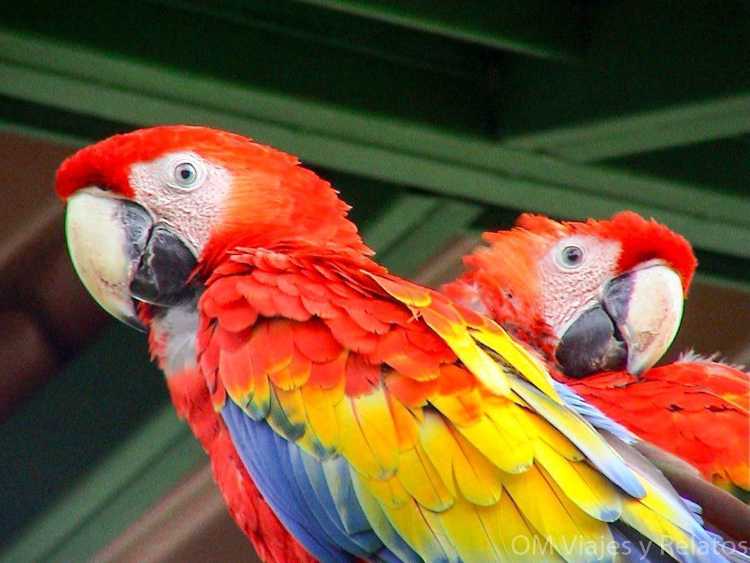 viajes-Costa-Rica