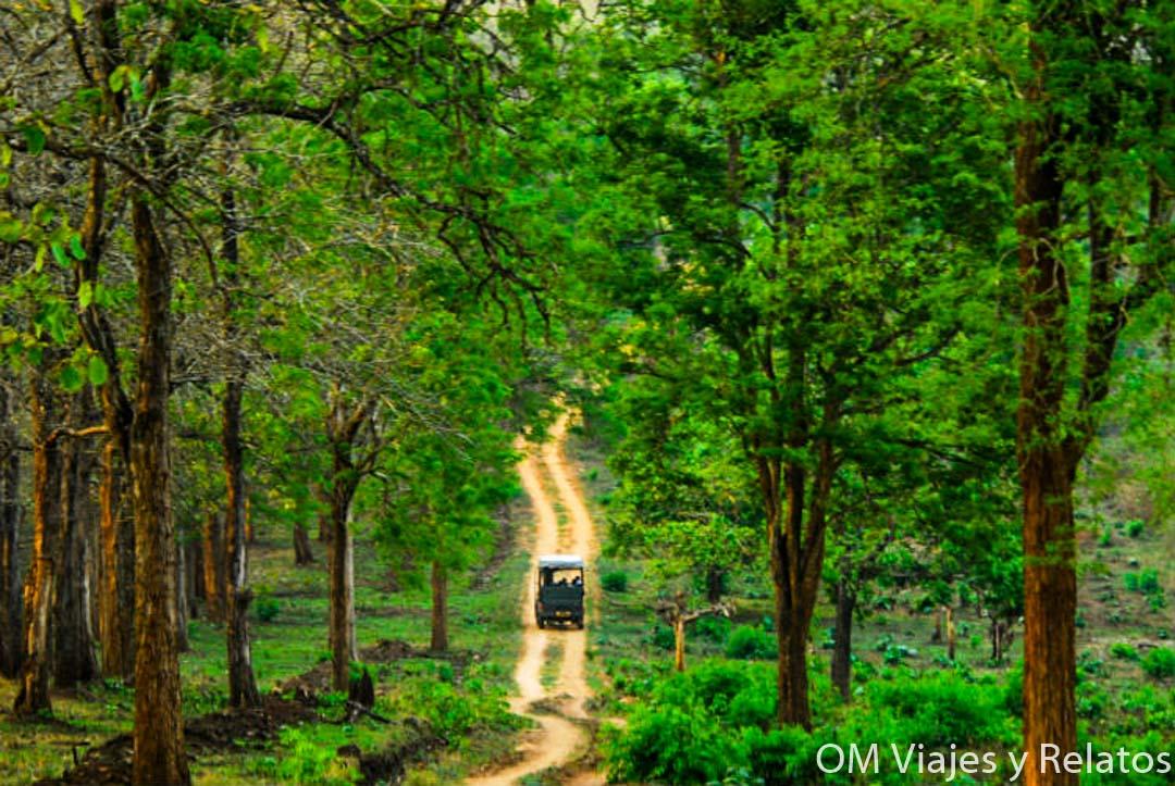 safari-Nagarhole-India