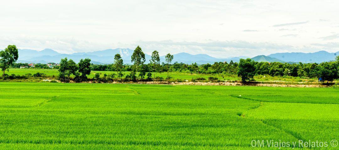 viajar-aVietnam-arrozales-Vietnam