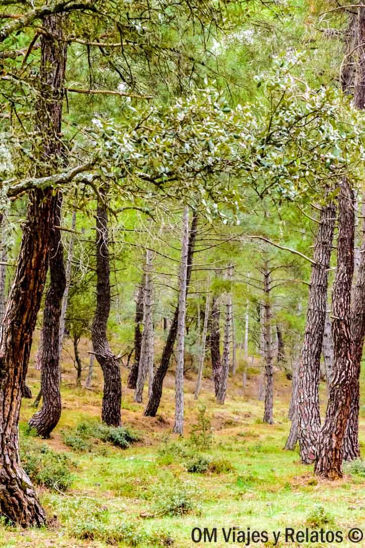 Sierra-Norte-de-Madrid-Sierra-del-Rincón
