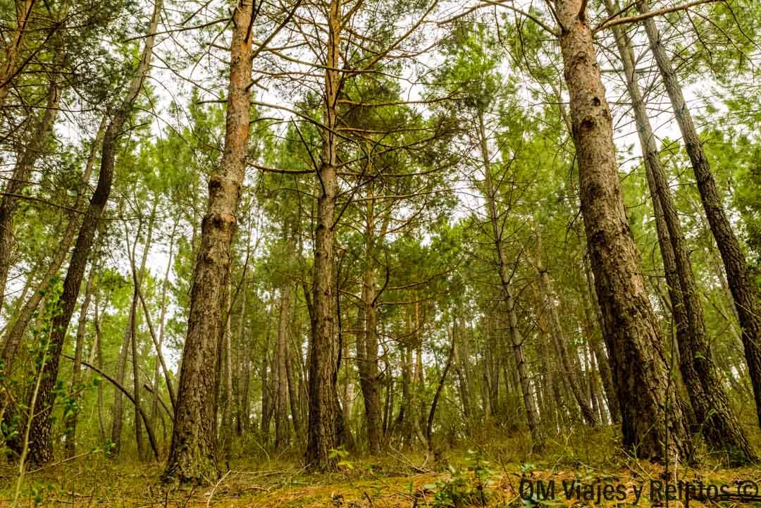Reserva-Biosfera-Madrid-Sierra-Rincón