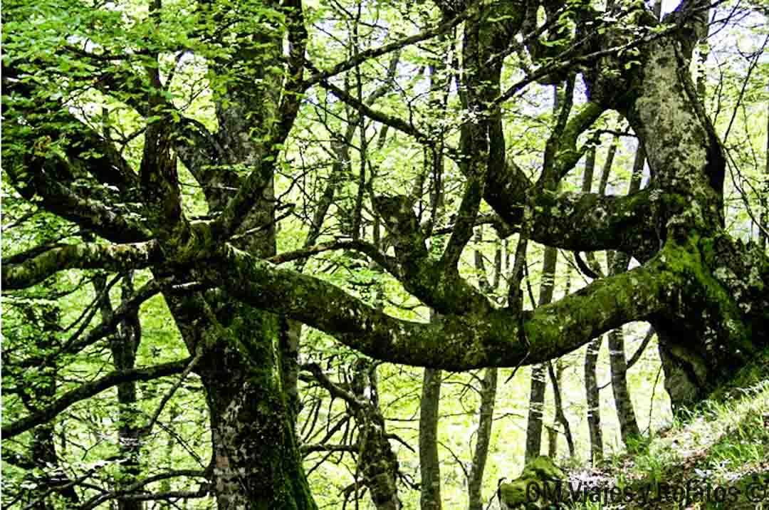 bosques-Asturias