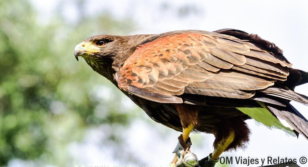 Aves-rapaces-Monasterio-Piedra