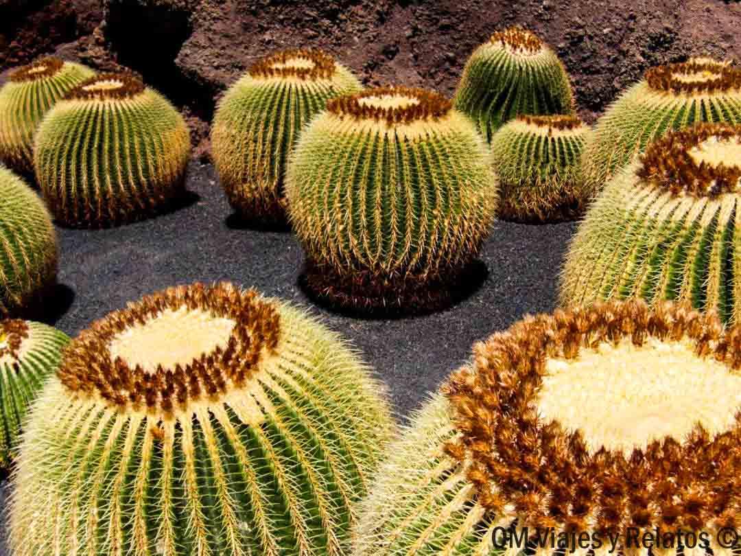 que-hacer-que-ver-en-Lanzarote-jardín-cactus-Lanzarote