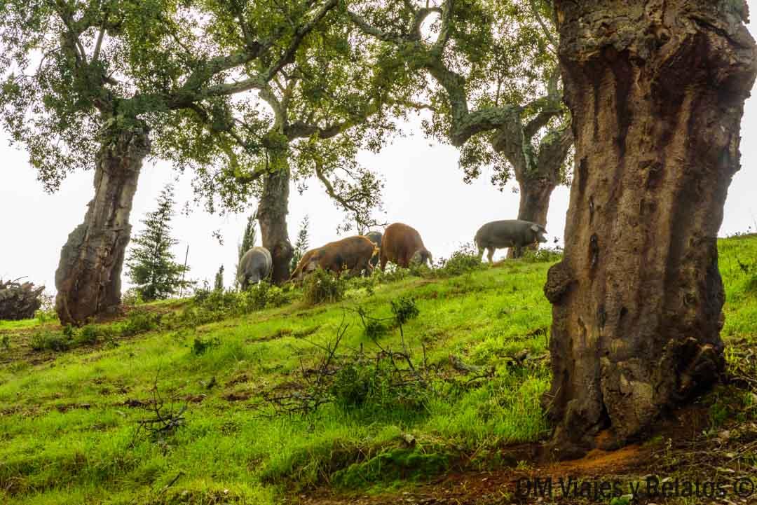 turismo Aracena