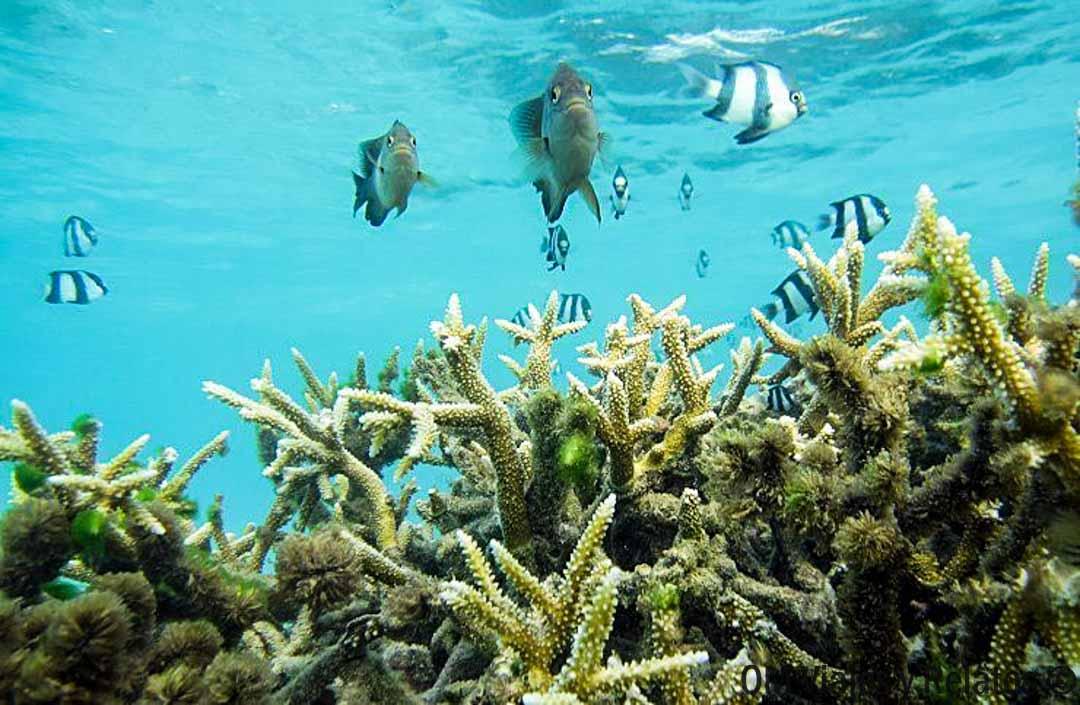 buceo-Maldivas-por-qué-ir-a-Maldivas