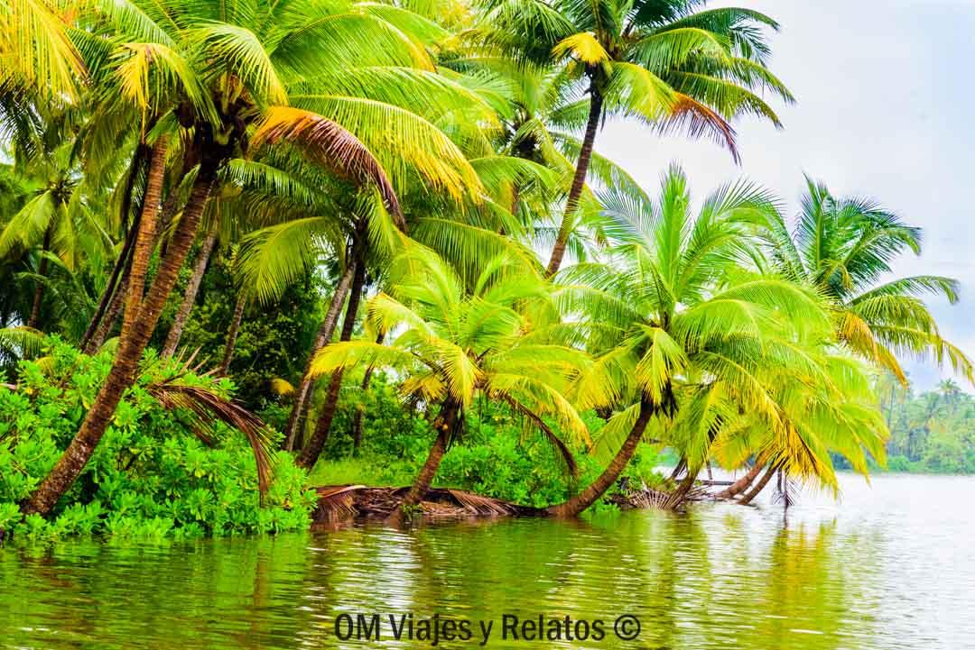 qué-ver-en-Kerala-Backwaters