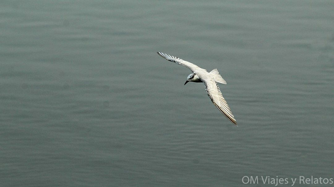 kerala-que-ver-reswrvas-aves