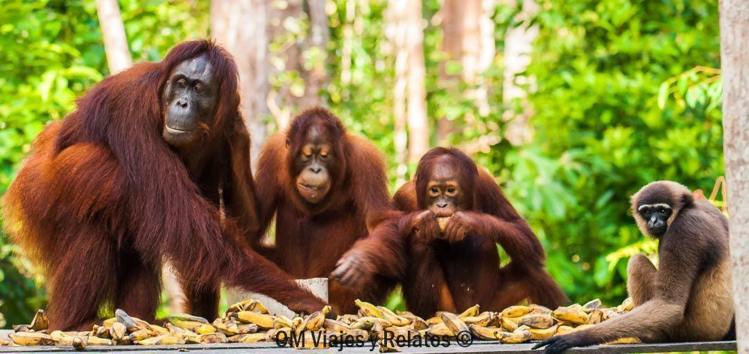 plataformas-de-alimentación-Borneo
