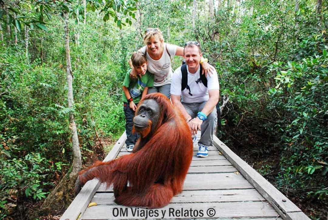 orangutanes-de-Borneo-om-viajes-y-relatos