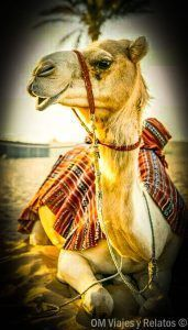 excursión-desde-Marrakech-desierto